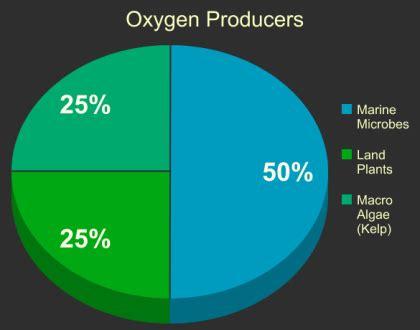 Dissolved Oxygen Essay - 947 Words Major Tests
