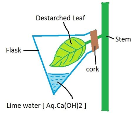 Dissolved Oxygen Essay Example for Free
